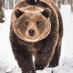 Snow Bear Paint By Numbers Kit - Just Paint by Number