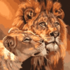 Lions together Paint By Number Kit - Just Paint by Number
