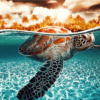 Paint by Numbers Kit Diving Turtle - Just Paint by Number