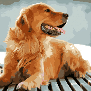 Paint by Numbers Kit Dog Golden Retriever - Just Paint by Number