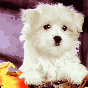Paint by Number Kit White Cute Dog - Just Paint by Number